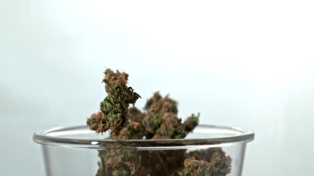 super slo mo buds of marijuana falling into glass cup - legalisation stock videos & royalty-free footage