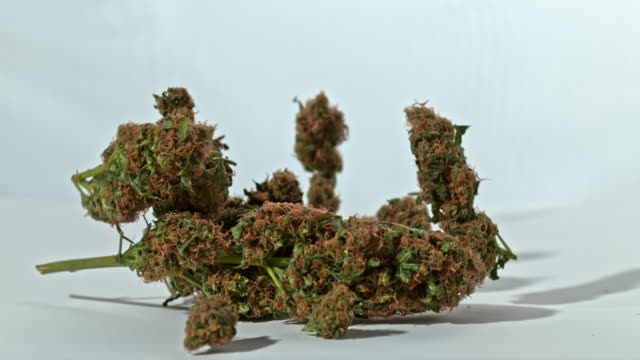 super slo mo buds of marijuana falling on a white surface - weeding stock videos & royalty-free footage