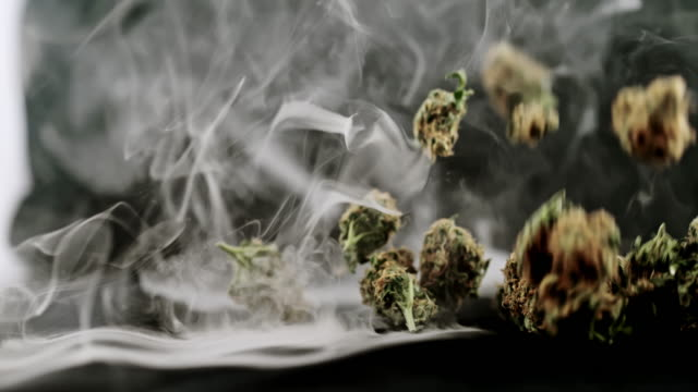 super slo mo buds of marijuana falling over smoky background - marijuana herbal cannabis stock videos & royalty-free footage