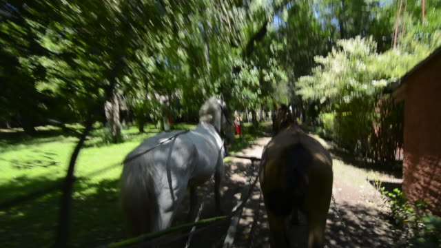stockvideo's en b-roll-footage met buenos aires argentina gaucho cowboy ranch for tourists outside city called don silvano ranch with horse drawn buggie ride - paardenkar