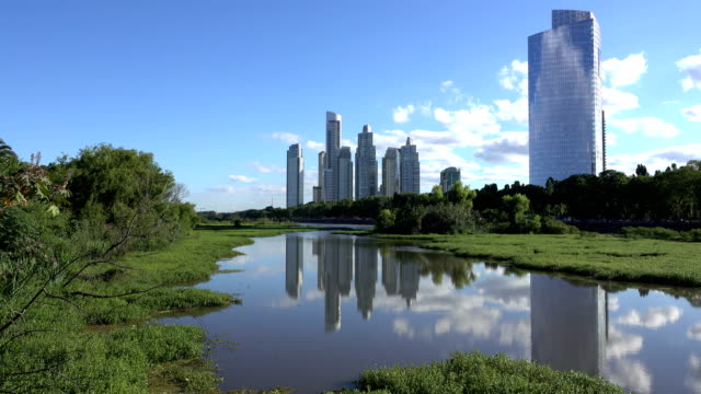 buenos aires puerto madero skyscrapers constanera sur ecological reserve forest butterfly argentina - nature reserve stock videos & royalty-free footage