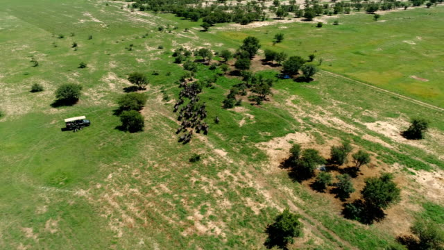 buffalo in south africa - 野牛点の映像素材/bロール