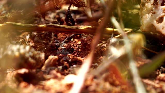 bug befall kriecht in den boden - katalanische feld, spanien - infestation stock-videos und b-roll-filmmaterial