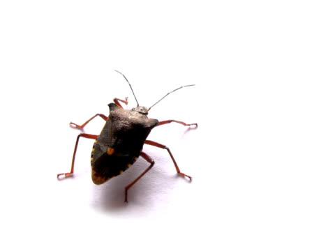 pal: bug - invertebrate stock videos & royalty-free footage