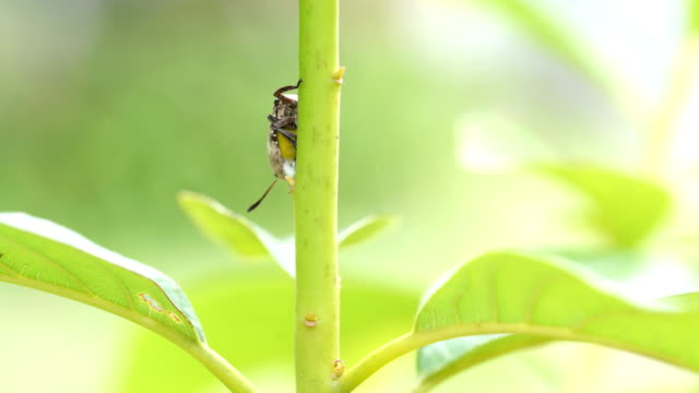 bugs on plant - invertebrate stock videos and b-roll footage