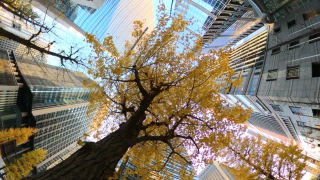 building | look up at the sky - ginkgo stock videos & royalty-free footage