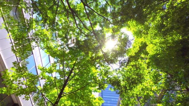 ビル、緑色-4 k - グリーン点の映像素材/bロール