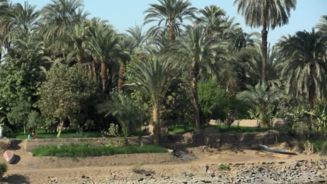 ms, pan, buildings and palm trees along nile river, egypt - river nile stock videos & royalty-free footage