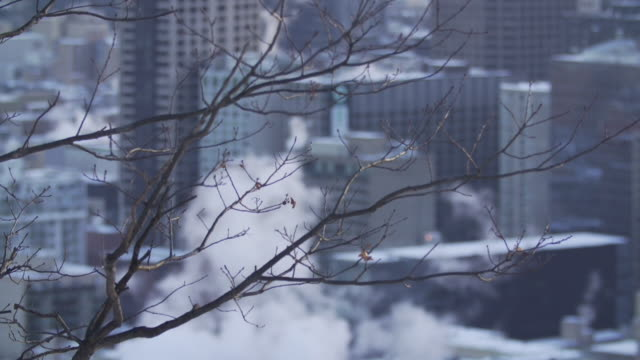 buildings emitting smoke in winter - bare tree stock-videos und b-roll-filmmaterial