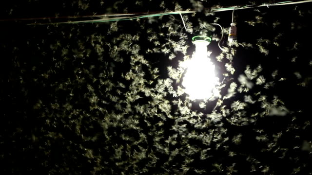 bulb with swarming insects - moth stock videos and b-roll footage