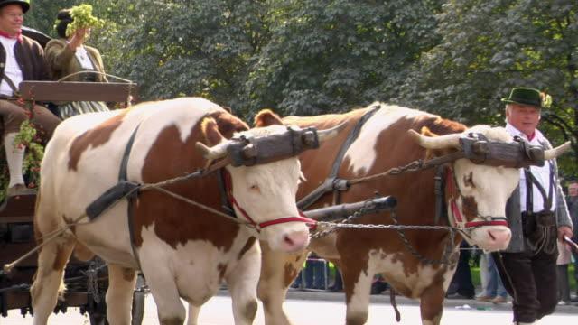 ms pan zo bull drawn carriage with barrel on street parade, munich, bavaria, germany - 牛車点の映像素材/bロール