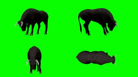 stockvideo's en b-roll-footage met bull eten groen scherm (loopbare) - stier mannetjesdier
