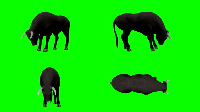 vídeos de stock, filmes e b-roll de touro comendo tela verde (loopable) - búfalo africano