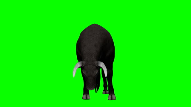 bull eating green screen (loopable) - bull animal stock videos & royalty-free footage