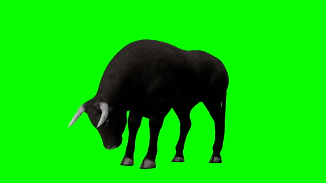 bull eating green screen (loopable) - wild cattle stock videos & royalty-free footage