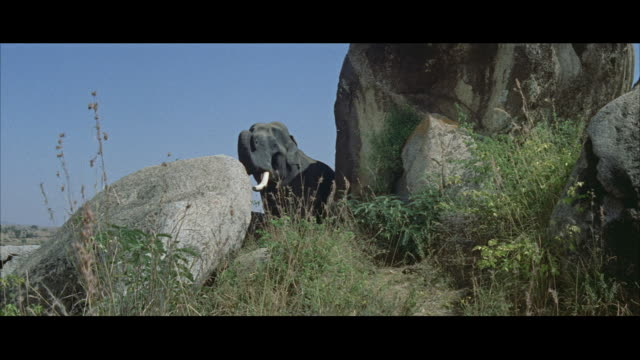 ms bull elephant standing by large boulders on cliff - レターボックス点の映像素材/bロール