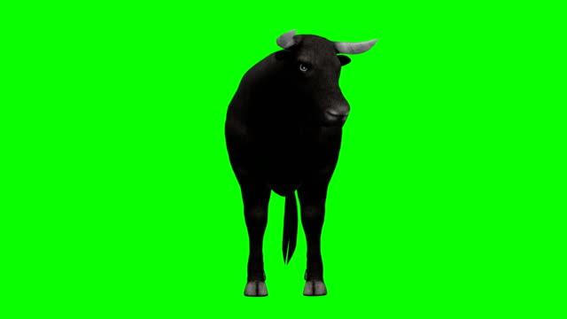 ブル アイドル緑画面 (単発) - 雄牛点の映像素材/bロール