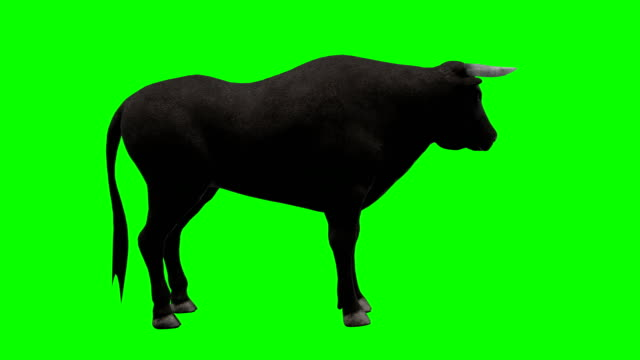 bull idle green screen (loopable) - bull animal stock videos & royalty-free footage