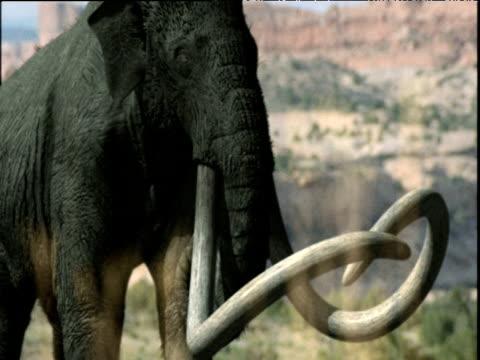 bull mammoth grazes, usa - extinct stock videos and b-roll footage