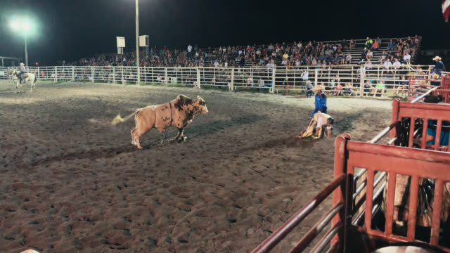 a bull rider competes in a bull riding event before being thrown from the bull's back while the rodeo clown distracts the bull in a stadium full of people at night - cowboy stock videos & royalty-free footage