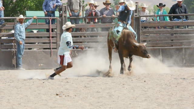 bull riding cowboys at a rodeo - rodeo stock videos & royalty-free footage