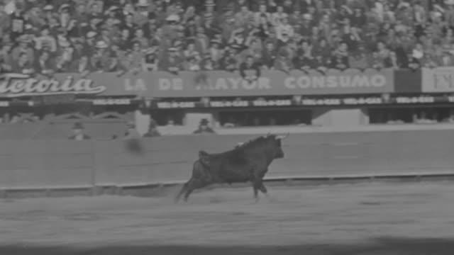 WS TS Bull running fast in bullring