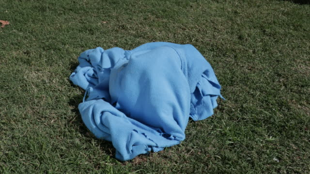 bull terrier puppy playing in blue blanket - blanket stock videos and b-roll footage