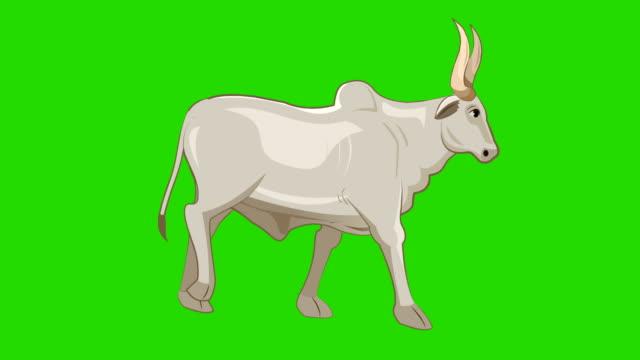 bull walk fahrrad-animation - symbol stock-videos und b-roll-filmmaterial