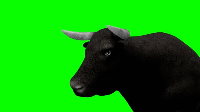 Bull Wandern Greenscreen (Endlos wiederholbar)