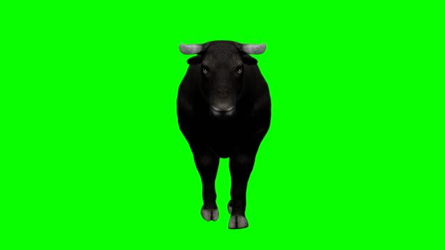 ブルウォーキンググリーンスクリーン(ループ可能) - 雄牛点の映像素材/bロール