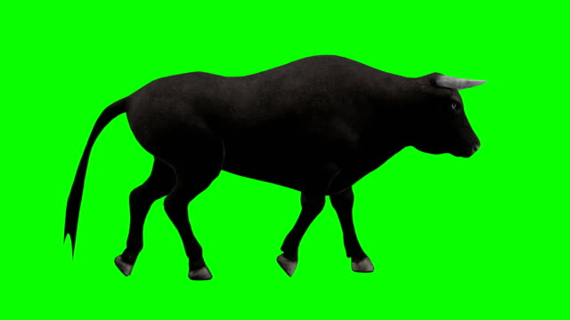 vidéos et rushes de bull walking green screen (loopable) - taureau
