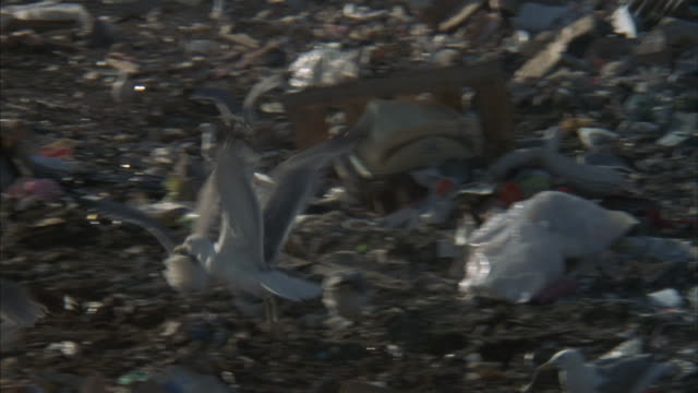 a bulldozer pushes garbage through a landfill as seagulls dig through the trash. - plastic bag stock videos and b-roll footage
