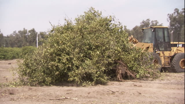 stockvideo's en b-roll-footage met a bulldozer pushes plant debris into a pile. - bulldozer
