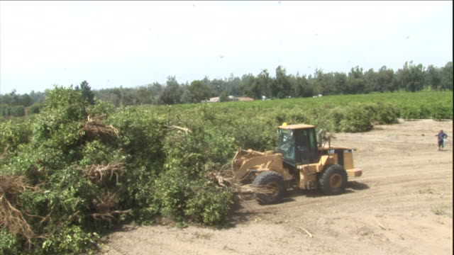 a bulldozer pushes tree branches across a clearing. - bulldozer stock videos & royalty-free footage