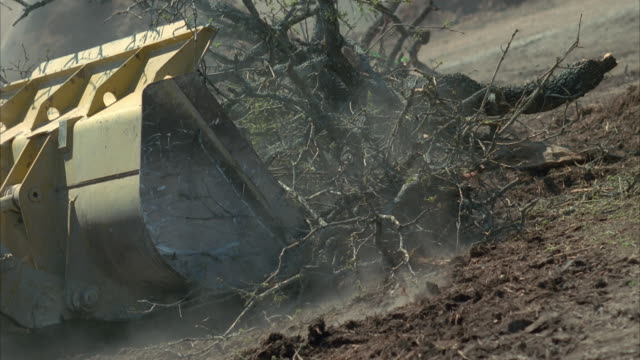 ms pan slo mo bulldozer pushing tree branches at construction site / cedar park, texas, usa - cedar park texas stock videos & royalty-free footage