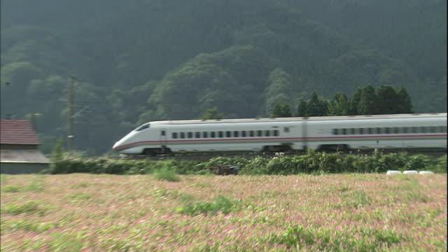 bullet train passes behind a buckwheat field in semboku, akita. - buckwheat stock videos & royalty-free footage