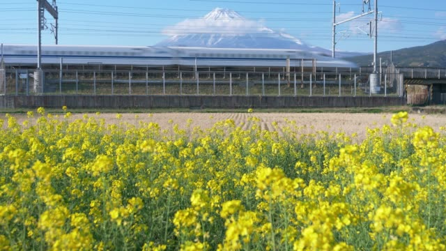 bullet train passing by mt. fuji and rapeseed blossoms - shinkansen stock videos & royalty-free footage