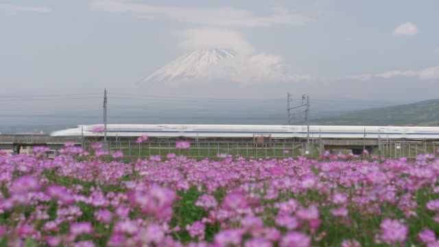 bullet train passing by mt. fuji and rengeso flowers - shinkansen stock videos & royalty-free footage