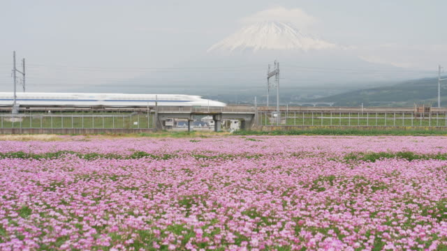 bullet train passing by mt. fuji in spring - japan stock videos & royalty-free footage