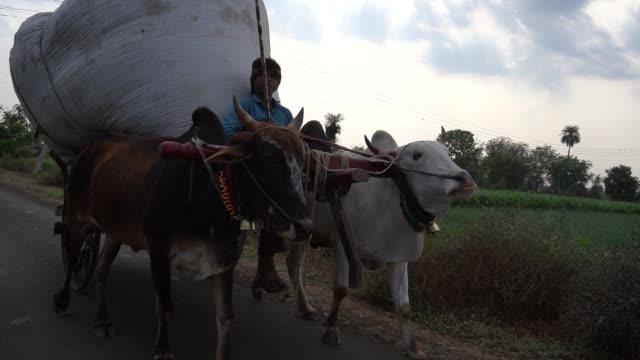 vidéos et rushes de bullock cart on village road - cattle