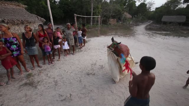 vídeos de stock, filmes e b-roll de bumba meu boi is a festival celebrating a bull and originally comes from africa the percussion is very african and the dancers imitate a bull the... - amazonas state brazil