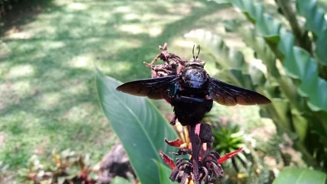 vídeos de stock e filmes b-roll de bumble bee - invertebrado