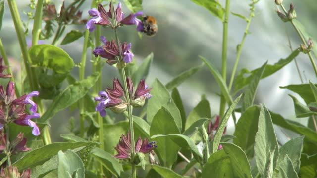 bumblebee flying on flowers - 園芸学点の映像素材/bロール