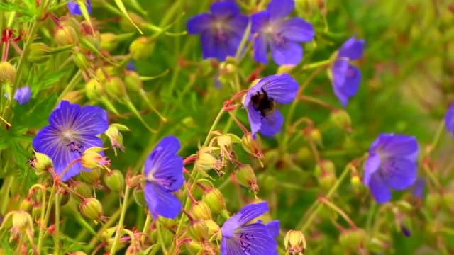 a bumblebee landing on a flower - flowerbed stock videos & royalty-free footage