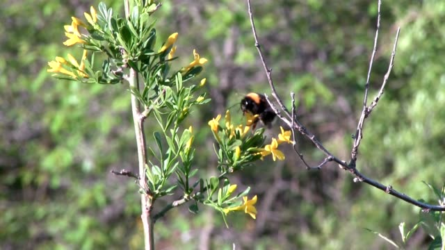 bumblebee - zoology stock videos & royalty-free footage