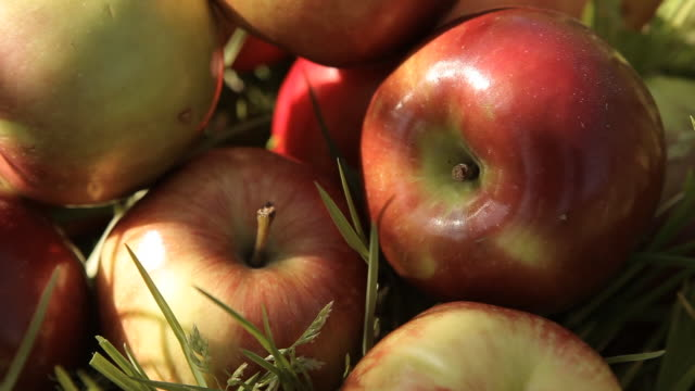 stockvideo's en b-roll-footage met bunch of apples - middelgrote groep dingen