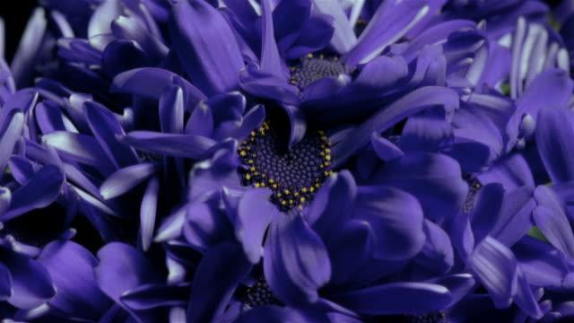 t/l, ecu, bunch of blue flowers wilting  - しおれている点の映像素材/bロール