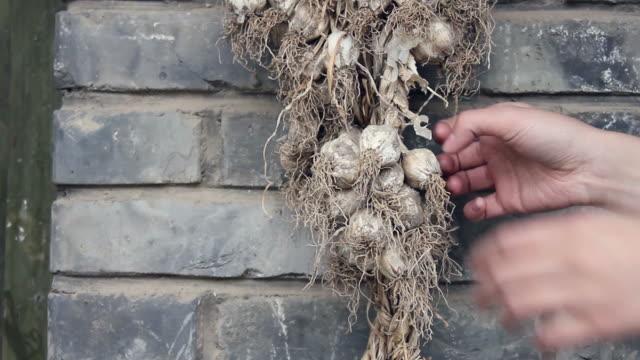 CU Bunch of garlic hanging on old Brick wall/xian,shaanxi,China