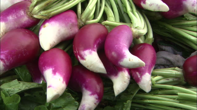 bunches of freshly harvested red turnips dry in the sun. - shimane prefecture stock videos & royalty-free footage