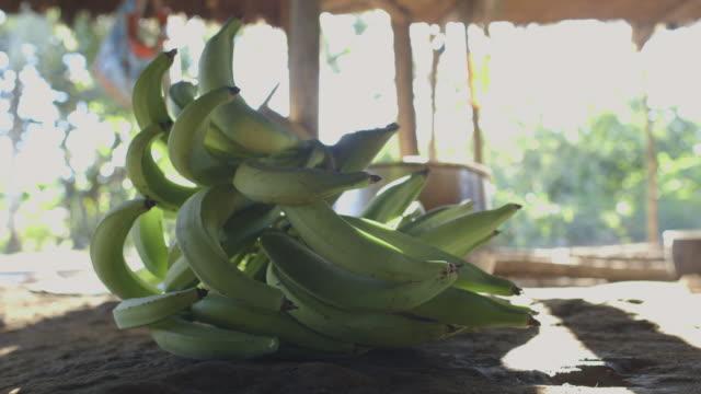 vídeos de stock, filmes e b-roll de cu bunches of green plantains sit on top of table / checherta village, peru - banana de são tomé